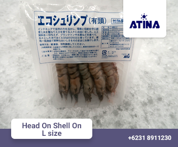 Head On Shell On L size