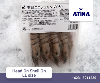 Head On Shell On LL size
